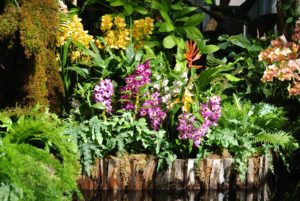 Thailand's year-round hot and humid climate is a perfect environment for leafy green plants and colorful flowers, including orchids.