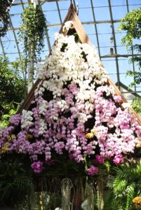 Many orchids cover the sala in shades of pink and white.
