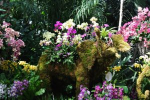 This is a beautiful display of mixed orchids at the Reflecting Pool of the Conservatory's Palm Dome.