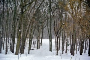 This is the winding carriage road leading into the woodlands - it is a spectacular view in any season.