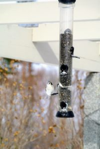 I make sure their bird feeders are refilled every day, and give them leftover bread whenever possible - they love it.