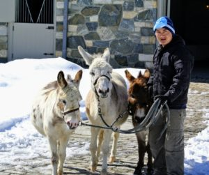 And, here is Pemba - he is bringing the donkeys in for the day. The three amigos - Billie, Clive and Rufus - love being outdoors.