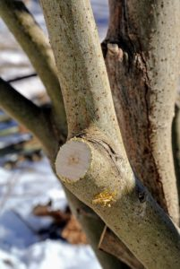 Pruning bushes also helps prevent disease, fungus and insect problems.