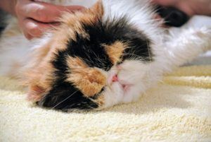 My cats are brushed every day to keep their coats as tangle-free as possible. Baths are done when needed.