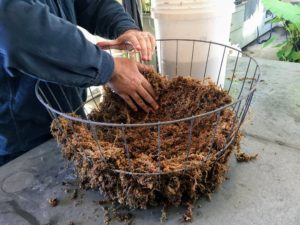 Mike presses the moss firmly along the sides, creating a one to two inch wall on the inside of the basket.