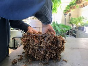 Here, it is easy to see how the moss molds to the wire frame.