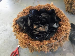 Next, Mike lines the sphagnum moss with a piece of black plastic - the bottom of a black garbage bag. This prevents the soil from drying out.