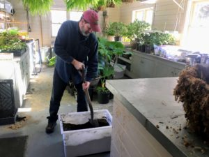 Mike uses a good potting mix combined with compost made right here at Skylands.