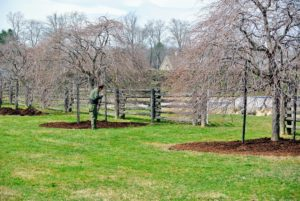 Meanwhile, back at my Bedford farm, the outdoor grounds crew is busy mulching the tree pits in time for Easter.