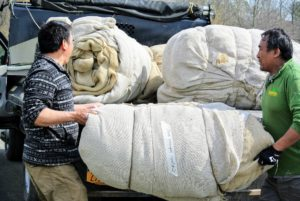 Chhewang and Pete collect all the rolls of burlap. Each of these sections is quite heavy - about 50-60 pounds.