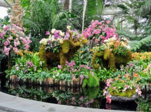 Everyone was greeted by this beautiful display of mixed orchids at the Reflecting Pool of the Conservatory's Palm Dome. The Thai elephant is an official national symbol of Thailand.