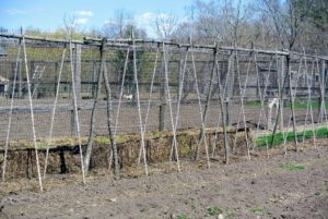 This is our long pea trellis down in the vegetable garden. Peas are one of first crops we plant outdoors at the beginning of the season.