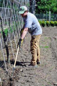When ready to plant, first dig a furrow in the soil using a hoe.