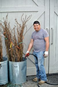 Wilmer removed the bundles, placed them in big trash bins and gave them all a good drink of water.