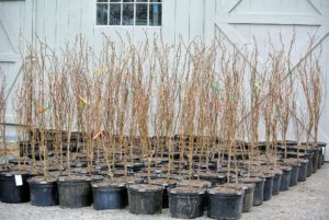 These trees were placed on the gravel in neatly organized and identified rows.
