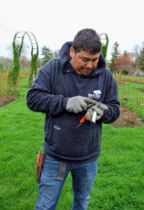 Always prune with clean, sharp equipment. Wilmer is an excellent tool sharpener.