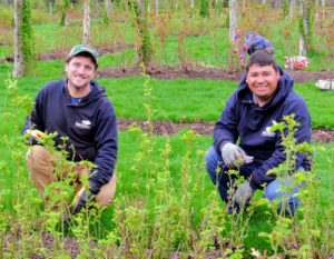 Here are Ryan and Wilmer - Stephen gave them one of the more challenging beds - one that also needed lots of weeding.