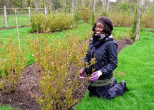 Here is our intern, Wambui - she spent some time working here at the rose garden as part of her NYBG rotation curriculum.
