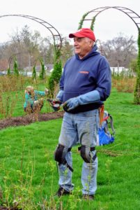 Stephen is also a raconteur - a good storyteller - and shared many tales on the history of various rose cultivars.