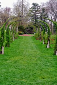 There are more than 15-thousand rose bushes and 800 varieties of old and new roses in the garden.