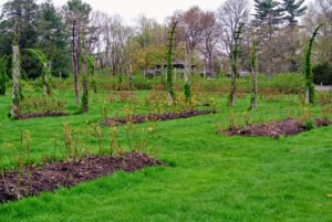 "The original main garden, the ""square,"" is an acre in size and has 132 rose beds."