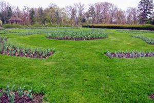 In mid-October, the Conservancy oversees the planting of more than 11-thousand tulips. The tulips are in bloom in early May.