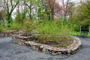 In the Heritage Garden, there are five raised beds edged in stonewalls that form the outline of a five-petal rosette. The rosette symbolizes a centifolia, a 100-petaled rose, which is typical of heritage roses.