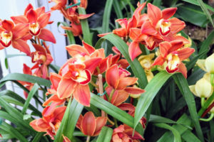 When caring for orchids, be sure the orchid food is formulated for orchids and follow the label instructions. In general, most orchid fertilizers recommend use once a month.