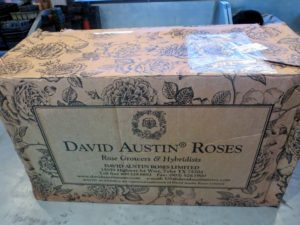 Our orders from David Austin Roses arrived in a sturdy, well-packaged box decorated with lovely roses specially designed for the company. http://www.davidaustinroses.com