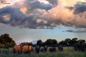 "Here, elephants enjoy the green grasses under a stormy summer sky. Jude and Truman were so great on all our daily trips to see the animals - they were up at dawn and always ready to ""rock and roll""."