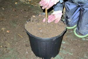 I am very proud of the nutrient-rich soil we have at the farm. We make composted manure for all our plantings.