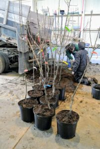 Wilmer and Wambui formed a productive assembly line to get the task done – here, they've already potted a good number of trees.