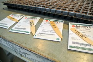 If you remember, these onion seeds were started from seed in early February, which is about two months before the last frost in the area. Johnny's Selected Seeds carries many varieties of certified organic vegetable seeds. http://www.johnnyseeds.com/