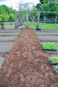 Once the beds were complete, Wilmer began creating the main footpath in the vegetable garden.