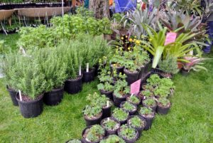 This particular booth was run by Hillside Nursery, a small nursery, plant culture lab, and research facility in Shelburne Falls, Massachusetts. I visit this tent every year. http://www.hillsidenursery.biz