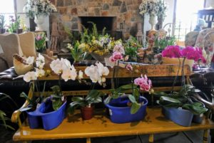 Here are more stunning orchids - so healthy and bold in color.