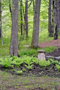 Here is another serene sitting area among the woodland ferns and other plantings.
