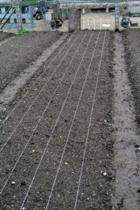 We wanted the onion plant rows to look tidy and straight, so to guide the rows, Wilmer used jute twine tied taut from one end of the garden bed to the other and secured with wooden stakes.