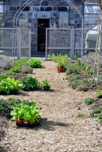 Many of the plants in this garden were started from seed. If you remember, Ryan and Wilmer planted seeds all winter and nurtured them in the greenhouse - and here they are grown up and ready to be transplanted outdoors.