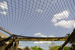 Pete installs the netting very tightly across the yard from one side to the other.