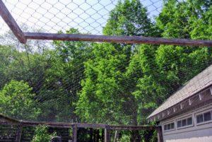 The entire chicken yard is also covered in protective netting, so the chickens, Guinea hens, turkeys, and Pomeranian guard geese are safe from predators.