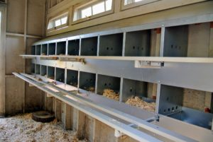 Here is a wall of nesting boxes ready for the hens. Each coop has 40-boxes.