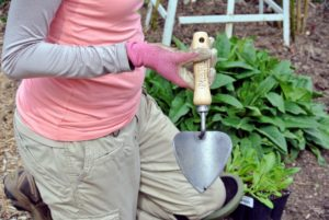 Here, Wambui is using the potting trowel exclusively from Gardener's Supply Company. It has a wide, curved blade that is ideal for scooping potting mix, and it holds more soil than a traditional trowel.
