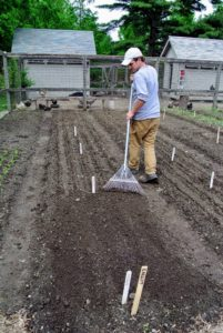 Then he goes over the bed with the back of a rake to ensure all the seeds are covered and the beds are tidy.