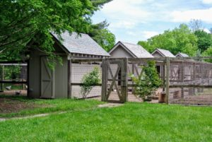 My four chicken coops are located near the vegetable garden past my stable, peacock yard and tropical hoop house. Visitors love stopping in to see all the different varieties of chickens I keep.