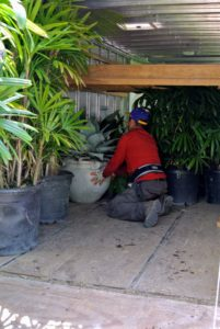 It is a tedious task, but the crew has done this every spring for several years, so they are experts at packing the plants onto the trailer.