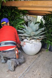 Chhiring puts a large potted agave into the trailer.