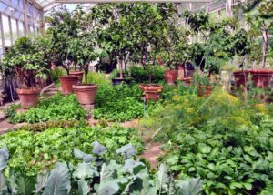 I also like to take as many vegetables as I can from the farm. There are many vegetables and herbs thriving in the rich, loamy beds of this greenhouse.