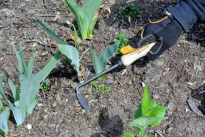 Used by generations of New England gardeners, Cape Cod weeders like this one slice weeds just below the soil line and are great for working in tight spaces. A four-inch metal tang extends into the handle, which is securely fastened with a welded socket.