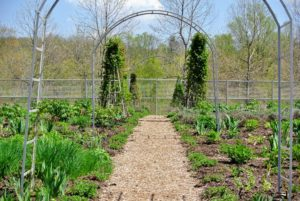 The garden is looking so wonderful already - in a few weeks, it will be stunning. I will be sure to share photos. What is growing in your gardens? Let me know in the comments below.